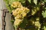 bi-winery_15