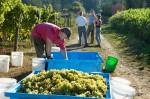 bi-winery_91