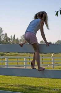 morgan-on-fence-1