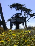 searchlight-with-flowers